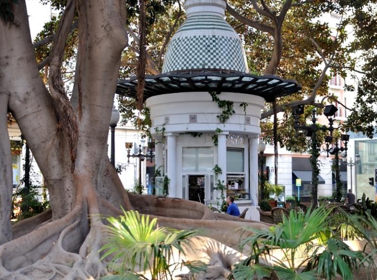 Portal de Elche, tomarse un café rodeado de ficus centenarios Centennial Arbol