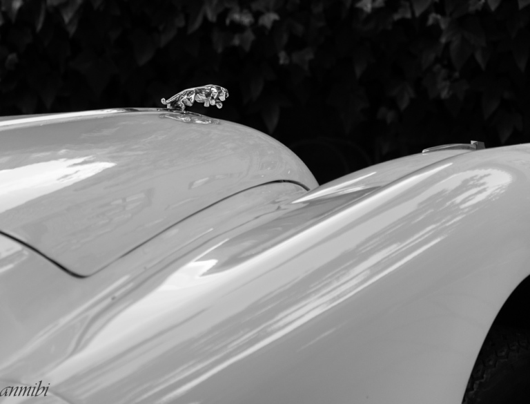 The curves of the Jaguar4
